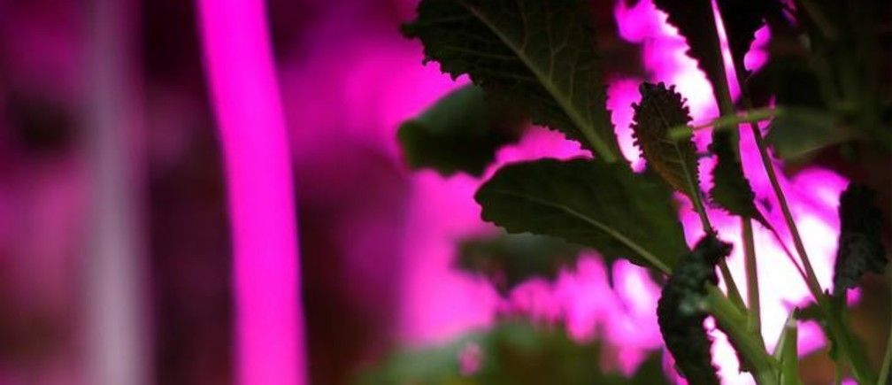 Why urban farming is changing the future of agriculture