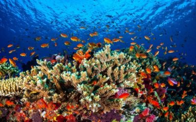 The world's oceans are warming faster than predicted